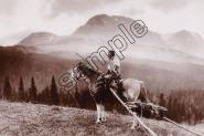 Mini Poster - M151 WOMAN WITH TRAVOIS, Blackfoot
