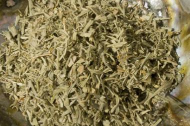Desert Sage 20 gr. - Wüstensalbei - Artemesia Tridentata